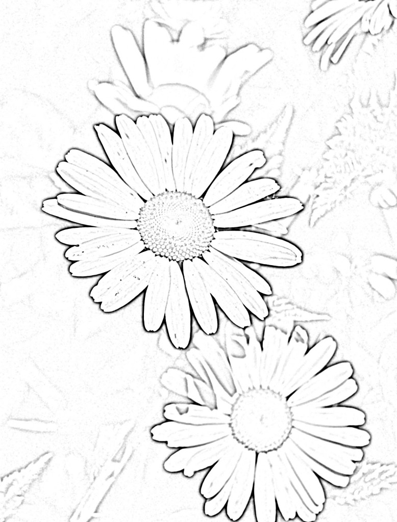 outline of daisy