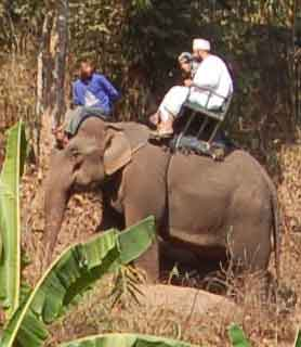 people riding the elephants