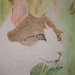 nikki13KittyCloseupcoloredpencil 150x150 August 2012 Art For Homeschool Art Show