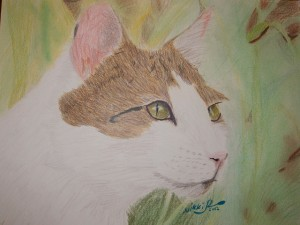 Kitty Closeup by Nikki, age 13, colored pencil