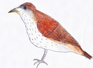 brownthrashergrayson8 300x220 November 2012 Art For Homeschool Art Show Results