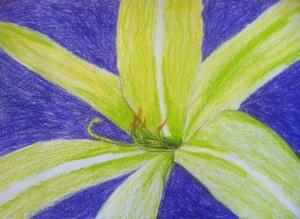 Lily by Kyla - age 13
