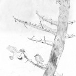 Bird Couple on a Winter Pine - Grayson - Age 9