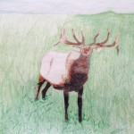 Jake, 13, Elk, colored pencil