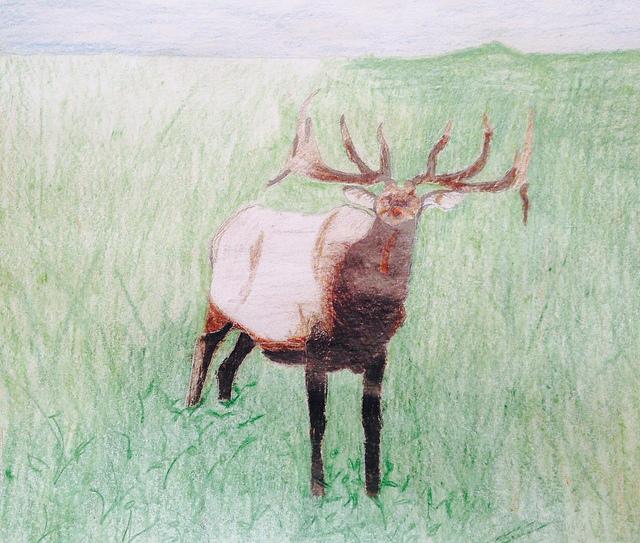 Jake, 13, Elk, colored pencil
